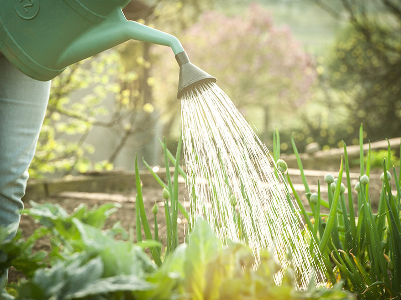 A green thumb's guide to August gardening