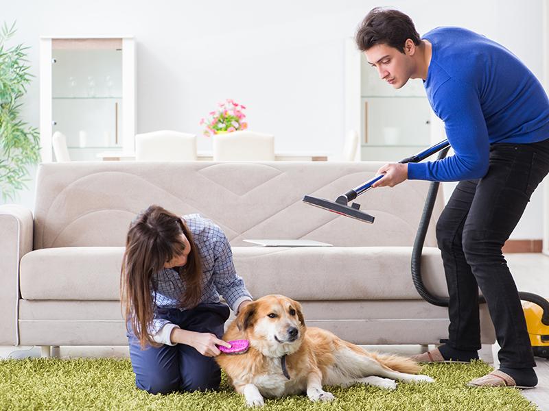 Ultimate flea control and prevention