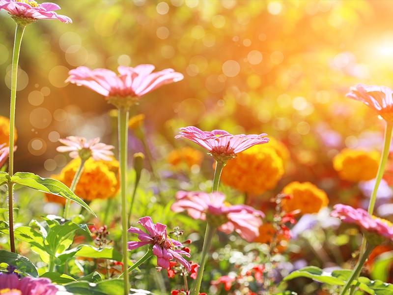 Your Autumn/Winter Garden Pest Protection List