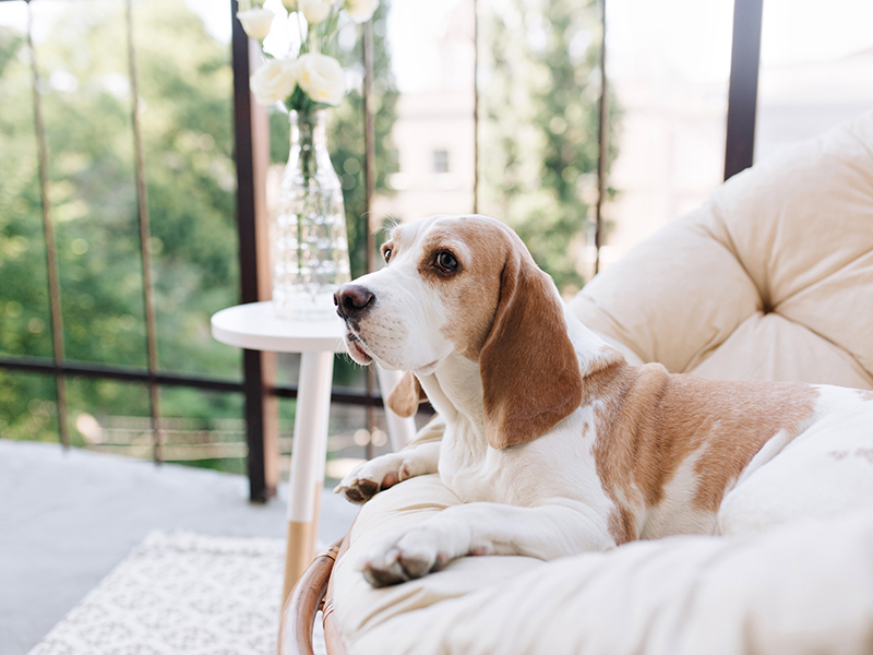 Home and garden pest protection for a pet home