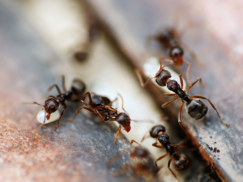 ant solutions
