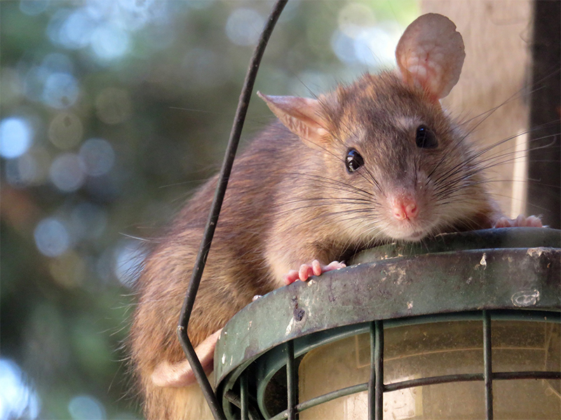 Rodent control 101: how to identify pests and protect your home