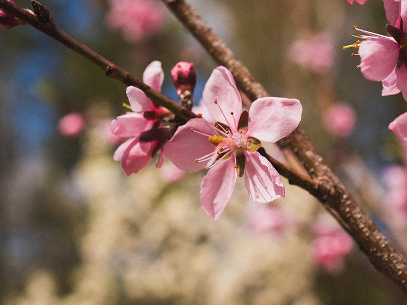 Gardening tips: Transitioning from winter to spring for a pest-free garden