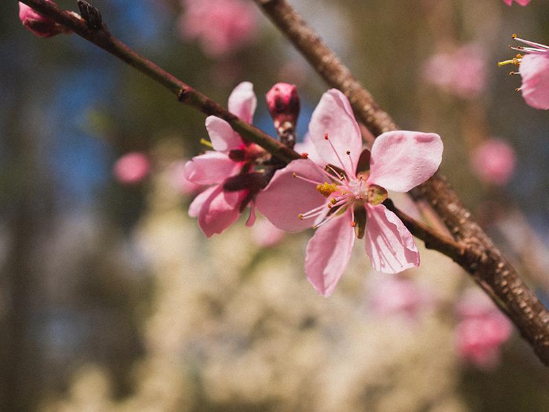 Tuinmaak Wenke: Die oorgang van winter na lente vir 'n tuin sonder plae
